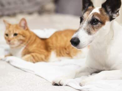 Goede supplementen voor huisdieren