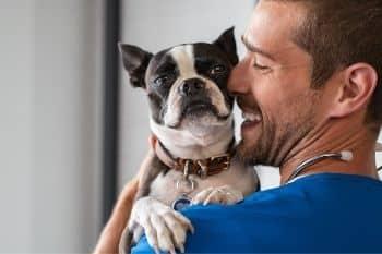 knuffelen met huisdieren is goed voor je gezondheid